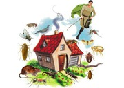 Pest Control Services in Kolkata