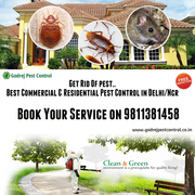 Holi Offer-20% OFF on all Pest Control Treatments in Delhi/Ncr