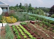 Terrace Vegetable Garden In Chandigarh