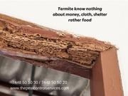 Termite Control Services in Chennai