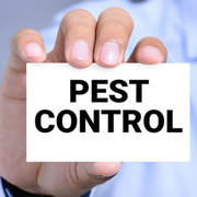 Termite Management Services in India